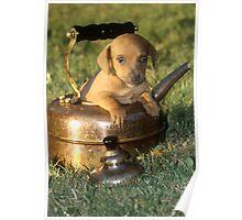 Zeus posing in a tea kettle-Vashon Is. Washington Poster