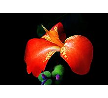 Yes I Canna! Photographic Print