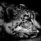 Snow Leopard by Karen  Betts