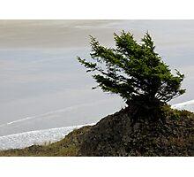 Survivor - Oregon Coast Photographic Print