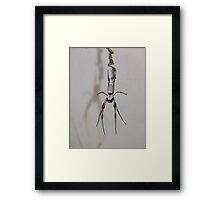 Welcome from the Orb Weaver Framed Print