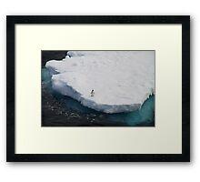 The Lone Penguin Framed Print