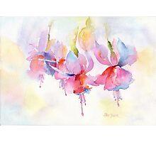 Fuchsia Watercolor Photographic Print