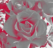 Duotone Rose by OlaG