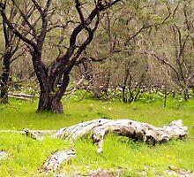 Ludlow Forrest Western Australia by ZanaPearce73