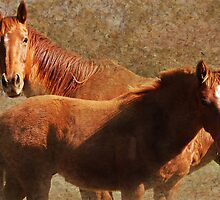 Mare & Colt by Eve Parry