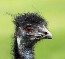 ~ Bad Hair Day ~ by LeeoPhotography