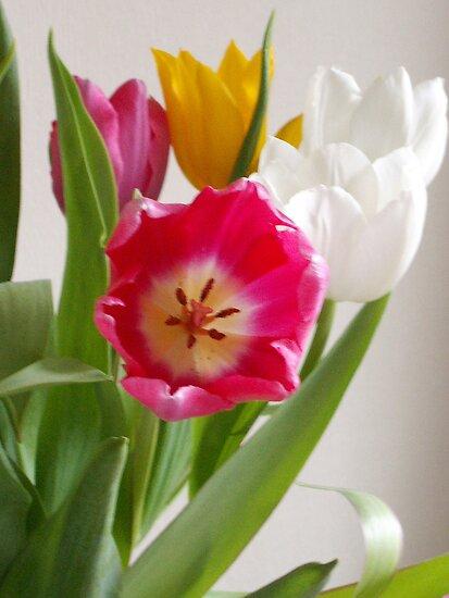 Tulips by OlaG