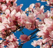 Welcome the Magnolia (Landscape) Sticker