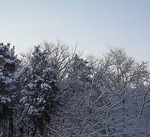 Frosty Forest by bbaxter18