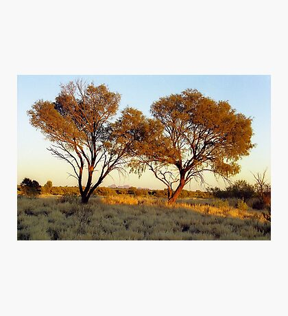 Outback Tree Twins, Australia Photographic Print