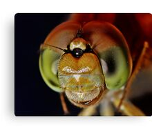 Compound Eyes of a Dragonfly Canvas Print
