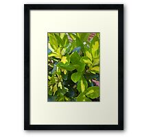 yellow and green leaves Framed Print