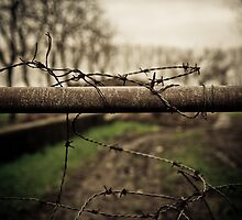 Thorns by Davide Ferrari