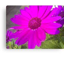 purple daisy like flower Canvas Print
