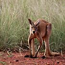 Red Kangaroo by Carmel Williams