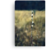 Pussy Willow Prairie Art Kitty Todd Nature Preserve Canvas Print