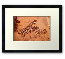 Fossilized plant Framed Print