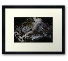 Ivy moudling around ancient stone Framed Print
