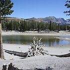 Lake Horseshoe by Dawn Parker
