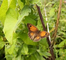 The Gatekeeper Butterfly by Deb Vincent