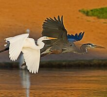 The Egret and the Heron by Marvin Collins