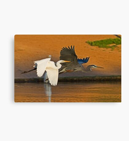 The Egret and the Heron Canvas Print