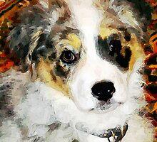 """Australian Shepherd """"Missy"""" by Jim Andersen"""