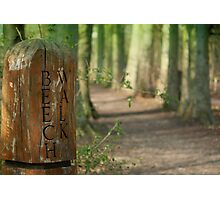 A Walk on the Beech! Photographic Print