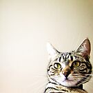 Millie Cat by Ladymoose