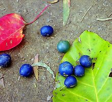 Blue Seeds with Leaves by Alberto  DeJesus