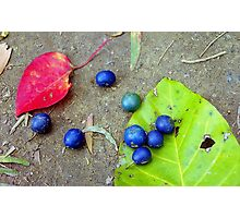 Blue Seeds with Leaves Photographic Print