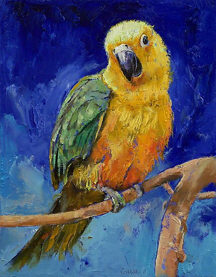 Jenday Conure by Michael Creese