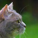 Whisker Day by Paul Revans