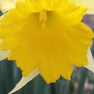 buttercup by Loretta Marvin
