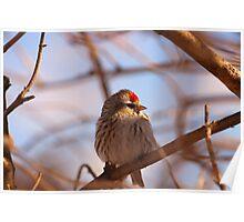 Birding - Cobden Ontario Poster