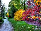 Autumn Path  by Marcia Rubin