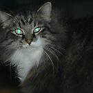 cat's eyes by Margaret  Shark