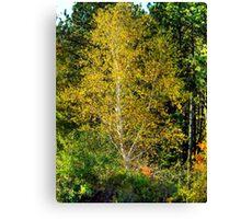 Lone Yellow Tree  Canvas Print