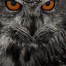 eagle owl by Brett Watson Stand By Me  Ethiopia