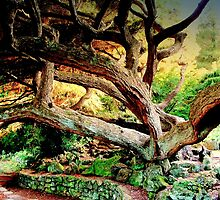 Vecchio Abero Magnifico /  Magnificent Old Tree  by Rick  Todaro