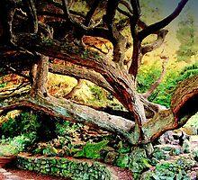 Vecchio Abero Magnifico /  Magnificent Old Tree  by fiat777