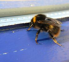 bumble bee in window by LisaBeth
