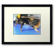 bumble Bee:) Framed Print