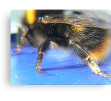 bumble Bee:) Canvas Print