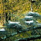 Six Egrets Nesting by Joe Jennelle