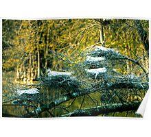 Six Egrets Nesting Poster