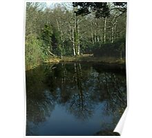 Trees mirrored in glassy lake Poster