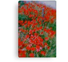 Poppy flowers  - wonderful spring et Austria (Niederösterreich) . . by Brown Sugar . Views (142). Dziękuję ! OK! VSOP !!! Fav (2) ! Canvas Print