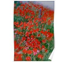 Poppy flowers  - wonderful spring et Austria (Niederösterreich) . . by Brown Sugar . Views (142). Dziękuję ! OK! VSOP !!! Fav (2) ! Poster